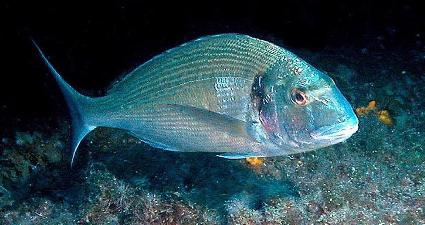 Balık Yemi Üretimi, Üretim Teknolojileri ve Katkıları